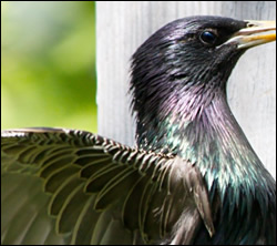 bird removal Kingwood